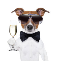 Hund Trinkt