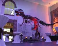 Senckenberg Dino Beleuchtet