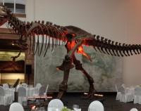 Senckenberg Dino