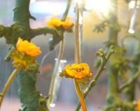 Destino Blume