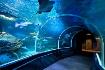 AquaDom & SeaLife Kachel